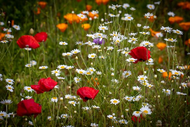 Fields pf Summer Colour