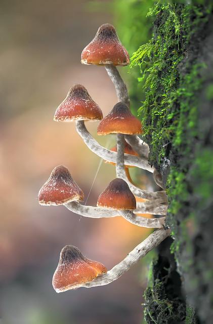 Bosque nativo Udec