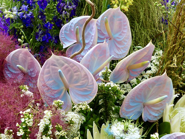 364. Large  Anthurium flowers in L.E.A.F Flower show (June 12&13, 2021) in Meat Packing District, Manhattan, New York.