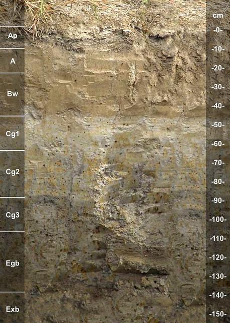 Falaya soil series KY