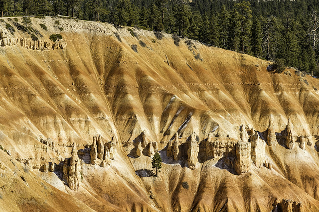 abstract nature art form inside Bryce Canyon NP