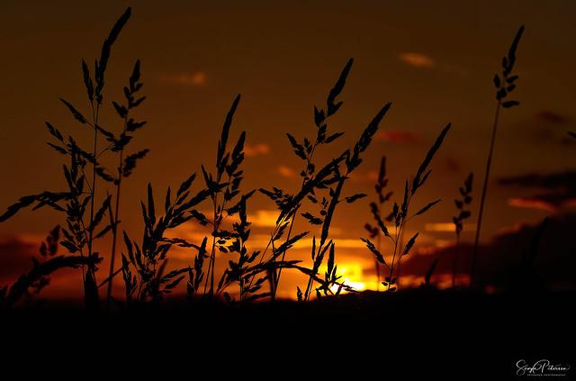 Pitt Meadows Sunset