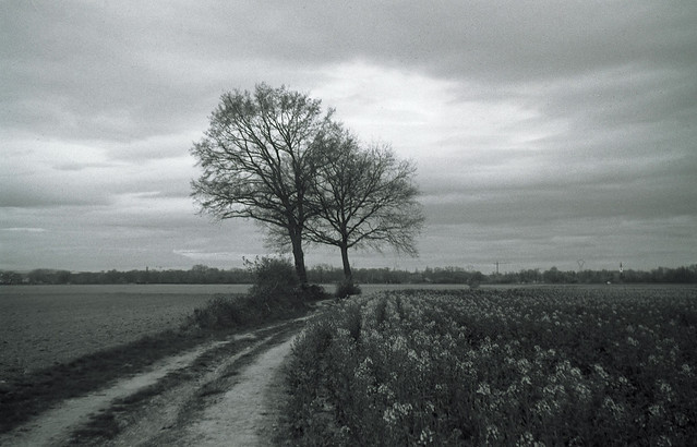 two leaning trees