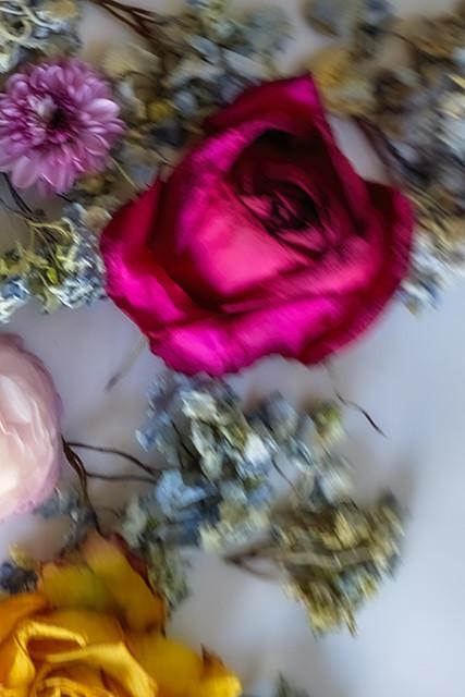 Lautrec Rose