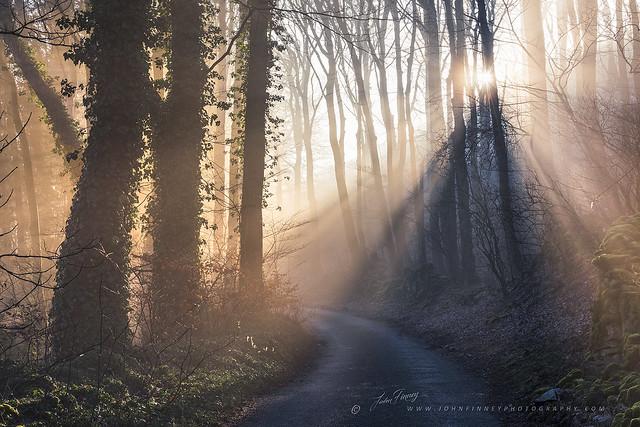 Majestic Misty Woodland