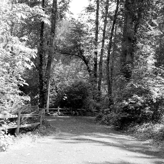 The park at Bothell Landing