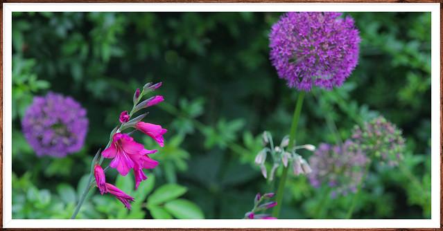 Kent Cottage Garden (aonb)