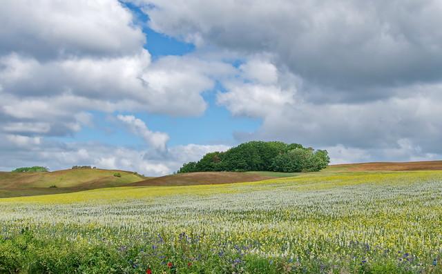 Landschaft im Juni
