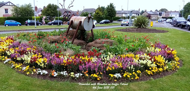 Flowerbed with Reindeer on traffic Island 4th June 2021 001