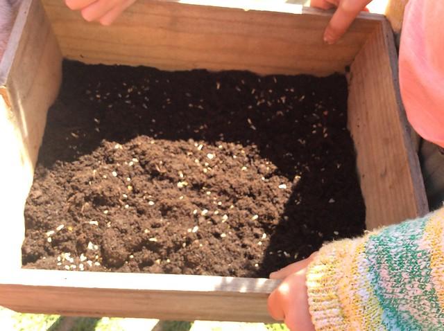 2de leerjaar - Zaaien en planten