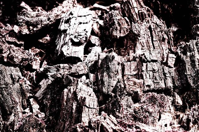 Baum Textur 2 –  infrarot abstrakt Kunst Fotografie.