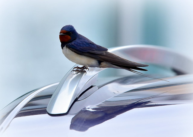 Shiny perch