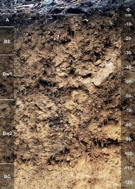 Helechawa soil series KY