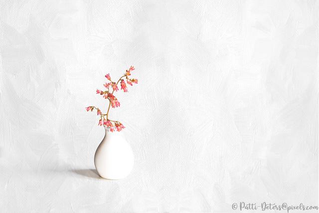 BV03 - Pink Coral Bells