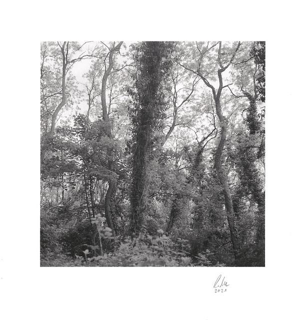 Ville-Lobotype-Gold