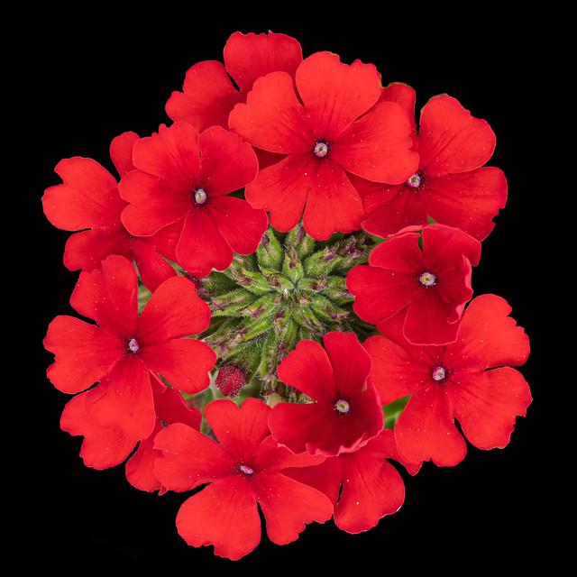 ...noch ein Blumenkastenblümchen