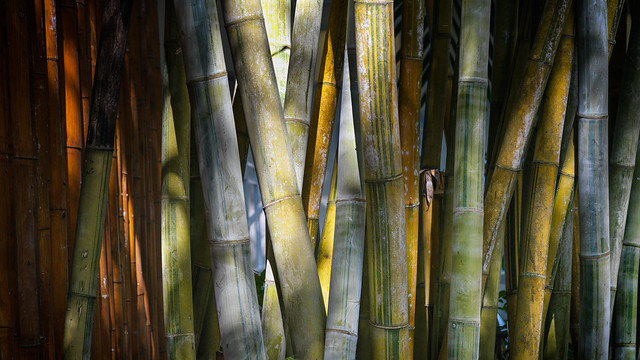 In the bamboo grove