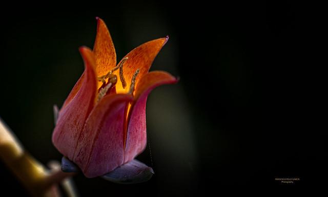 Flores y Plantas - 2019-179