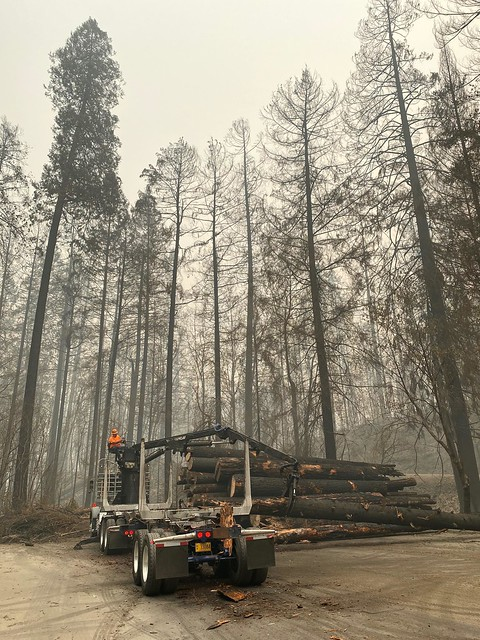 Salvage Timber Harvest