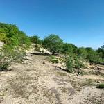 30 Mio. Jahre später: Sandstrand bei Siefersheim - Hiwweltour Heideblick