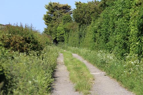 A summer walk nearly to Windy Ridge