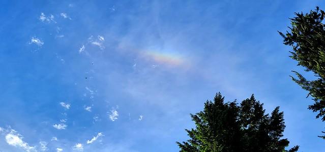 Spot Rainbow