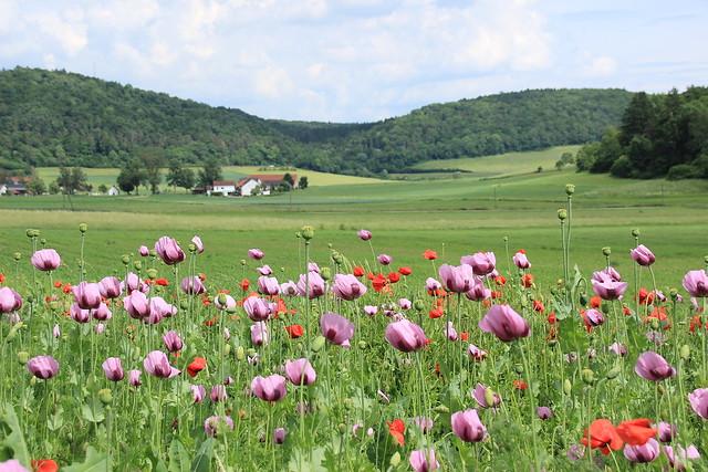 Landschaft in der nähe von KonsteinIMG_9974