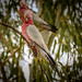 Birds in Qld and WA