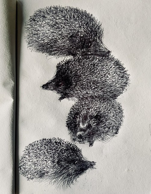 Hedgehogs in the garden ballpoint pen drawing by jmsw on recycled card. No2 New sketch book 2021.