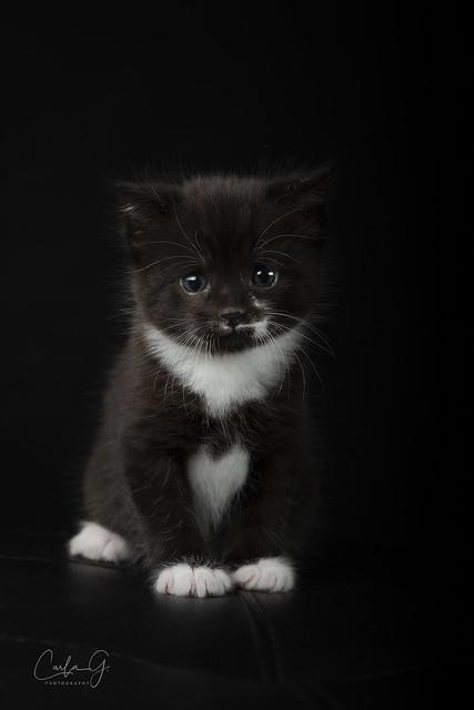 Stanley as a kitten