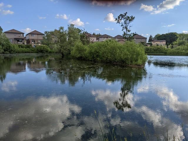 Neighbourhood Pond