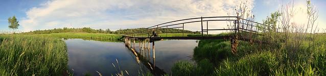 Панорама. Летний пейзаж Гатчинский район, Ленинградская область. Вид на реку Ижору, ПИЯФ, Орлову рощу