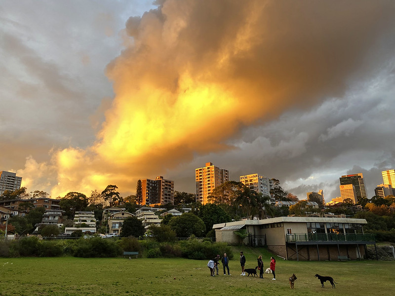 Blazing sunset at the dog park