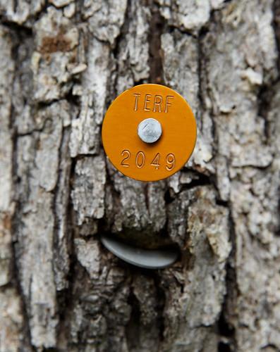 Fri, 05/17/2013 - 11:01 - Tree Tag Succession, Tyson Forest Dynamic Plot.  PC: Jonathan Myers