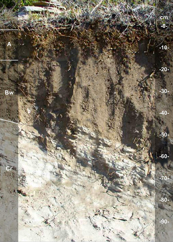 Whitetop soil series ID