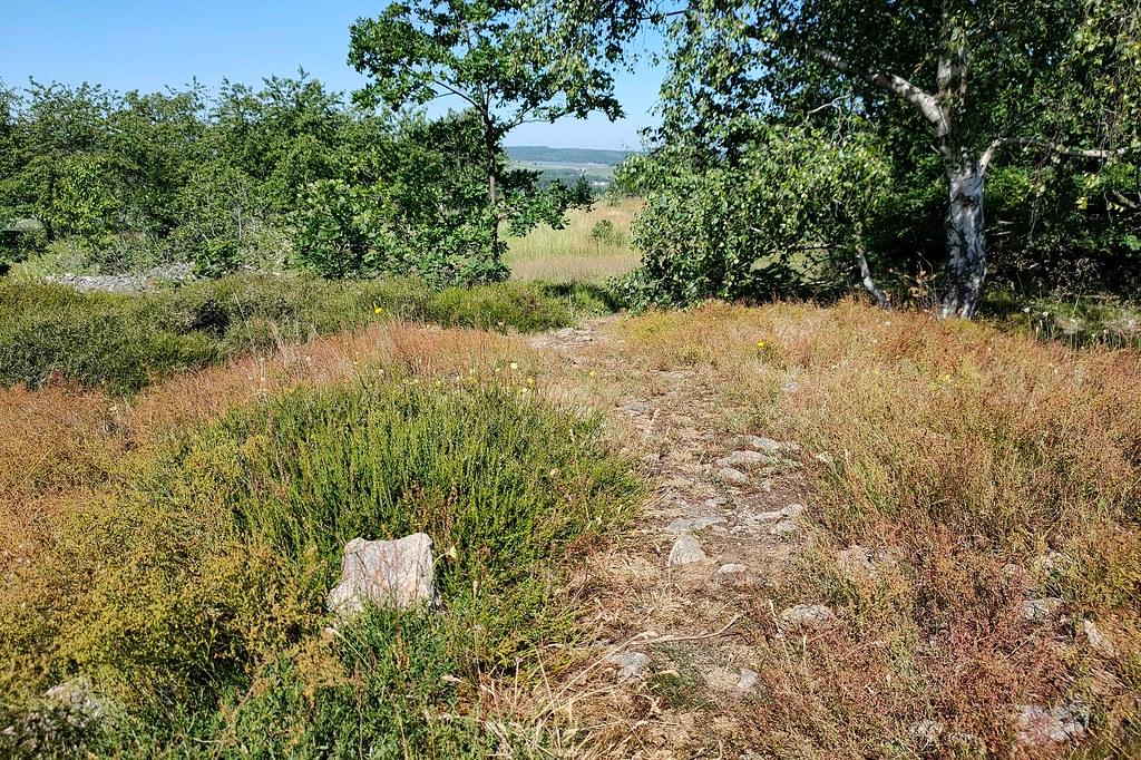 Heide auf dem Höllberg - Hiwweltour Heideblick