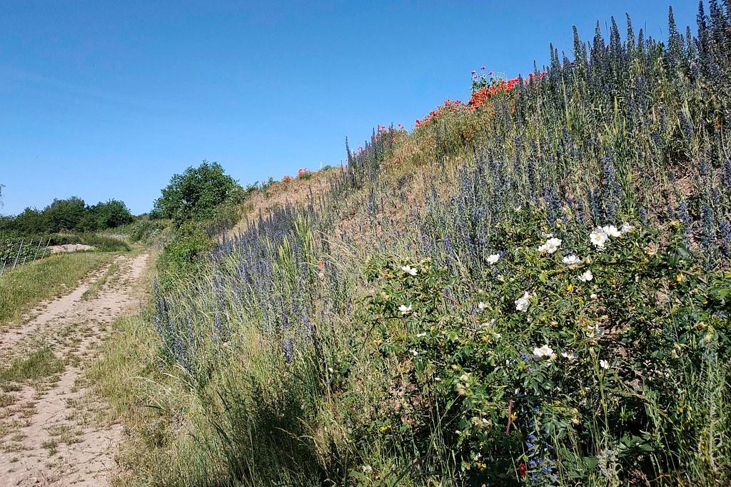 Blühende Pflanzen an der Böschung - Hiwweltour Heideblick