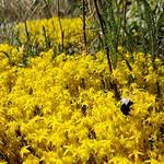 Fauna und Flora  - Hiwweltour Heideblick