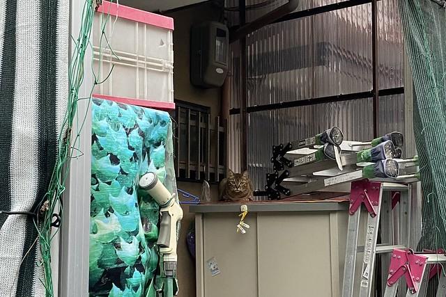 Today's Cat@2021−06−15