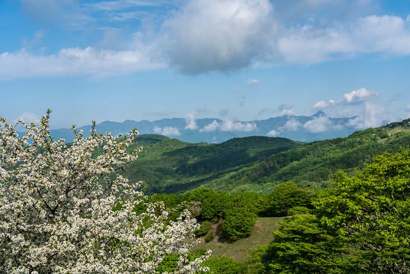 ズミの木と皇海山