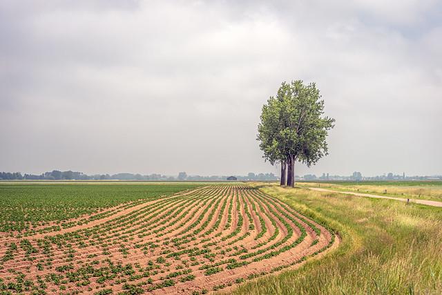 Picturesque photo of trees along a potato field