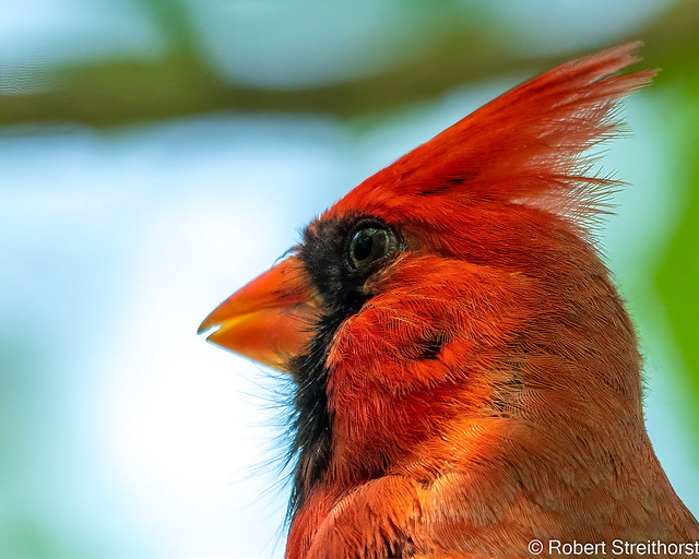 A Red Head