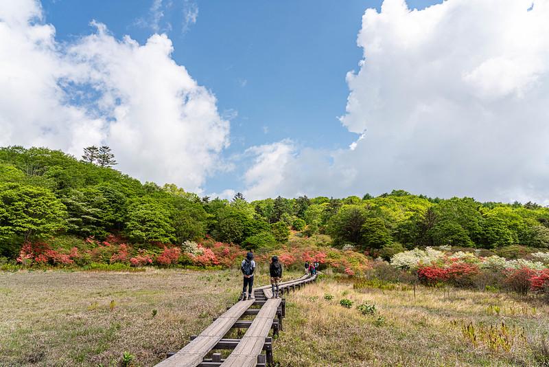 井戸湿原の木道