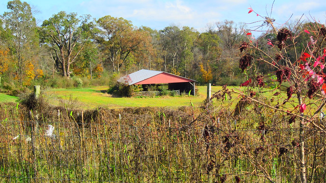 THE LARGE SHED AT OLIVE BRANCHFARM. ANSON COUNTY,N.C.