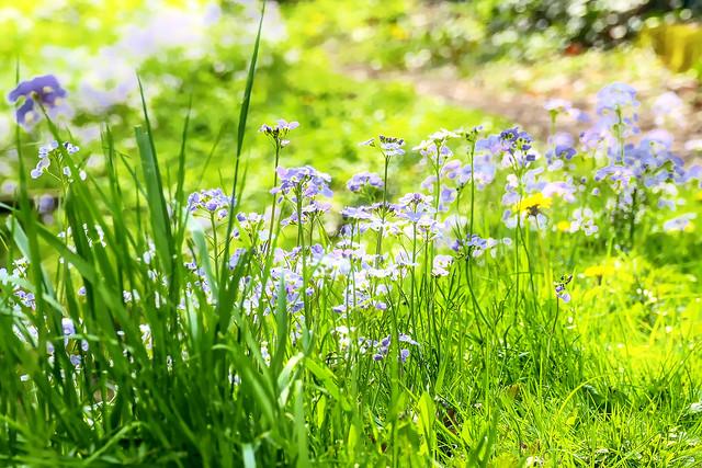 Frühlingswiese - Spring Meadow