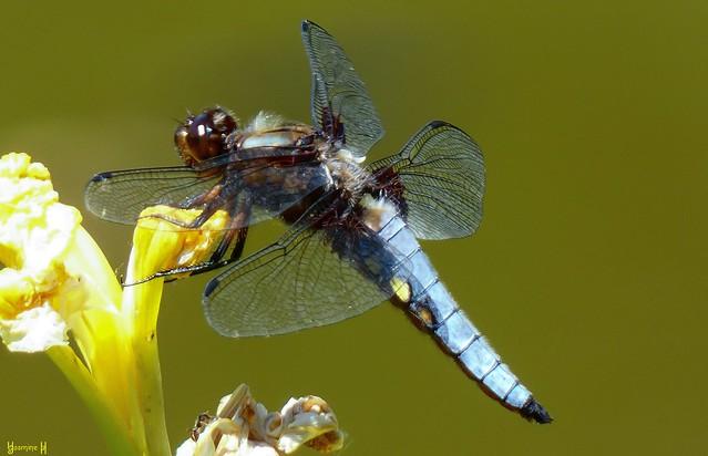 9843 -Dragonfly