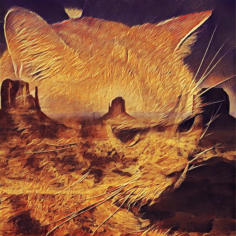 Memory of Burp - Died from Cancer  - Monument Valley -