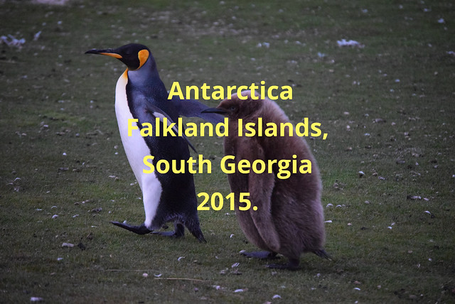 Our Second Featured Album for the Month of June 2021 is  Antarctica, Falkland Islands and South Georgia. Which we visited in November 2015. Hence its almost pristine condition. Please click on the link below.