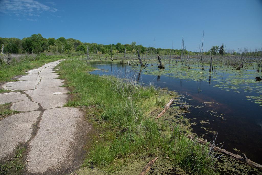 Taking Back the Wetland