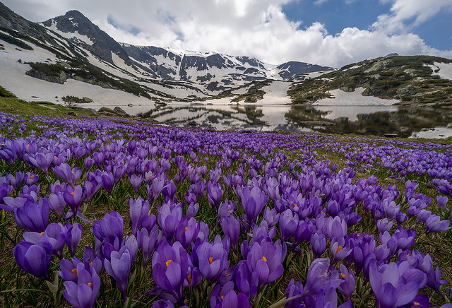 The purple carpet of the mountain